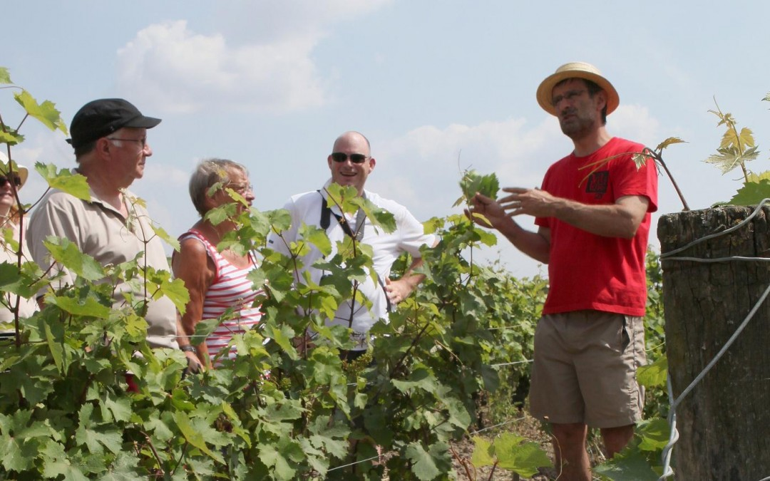 La nouvelle brochure « Vignes & Vins en Vallée du Loir » est arrivée !