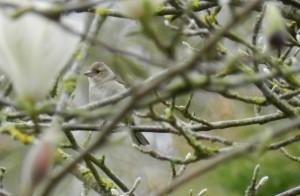 Jardin-Plessis-Sasnieres printemps crédit OTCPV (10)