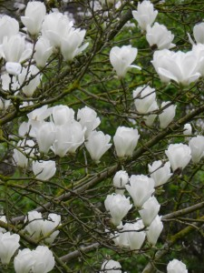 Jardin-Plessis-Sasnieres printemps crédit OTCPV (11)