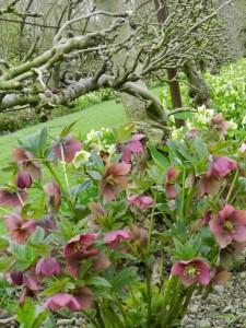 Jardin-Plessis-Sasnieres printemps crédit OTCPV (19)
