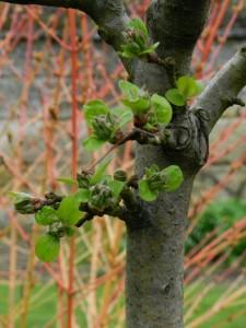 Jardin-Plessis-Sasnieres printemps crédit OTCPV (23)
