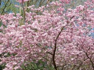 Sasnières-printemps crédit OTCPV (1)