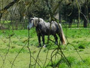 cheval, sur le chemin de saint jacques de Compostelle, Pezou à Meslay, Vendôme, Vallée du Loir, Loir et Cher, pélerin de saint jacques de Compostelle