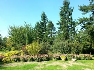 jardin de la Mardelle à Artins, Vallée du Loir, Pays de Vendôme, Pays de Ronsard, dalhias, rosiers, perspectives, sedum