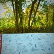 Maison botanique Boursay [OT Pays de Vendôme] (16)
