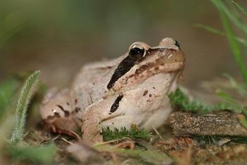 A la découverte de nos amies les grenouilles!
