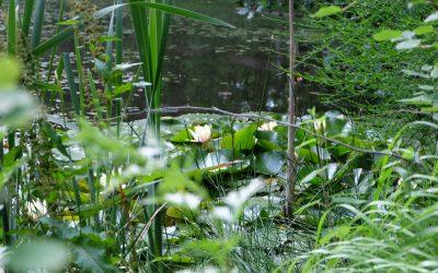 Balade rafraîchissante dans le Bois de l'Oratoire à Vendôme