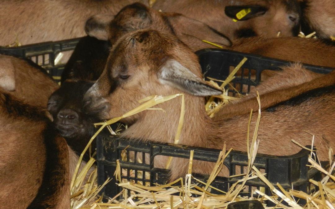 Une sortie à la ferme en famille
