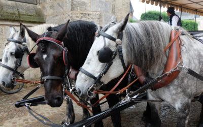 Vendôme inédit au rythme du pas des chevaux Percherons