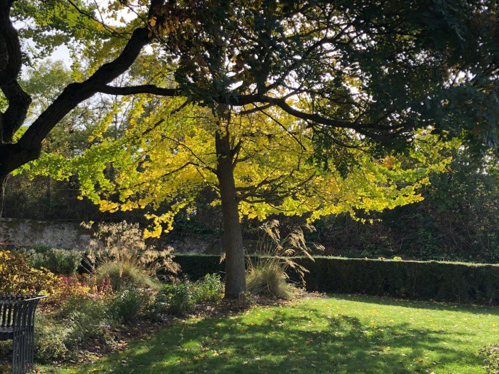 Parc du château de Vendôme en automne
