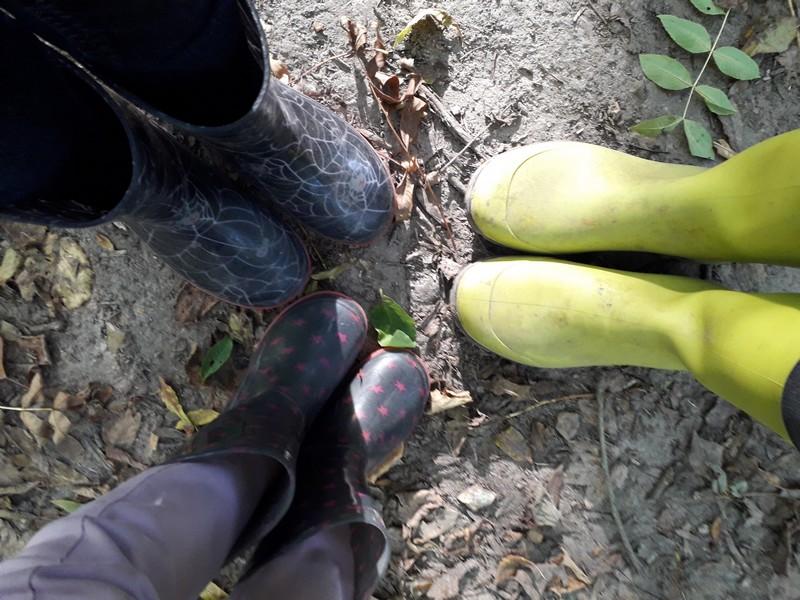 Balade dans les bois & land art